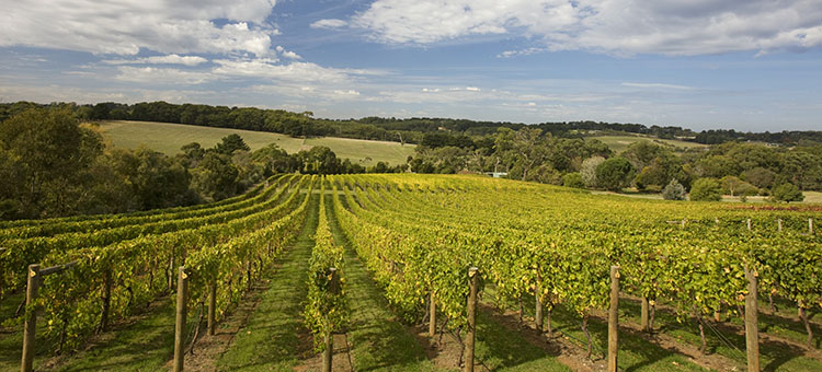 Winery - Mornington Peninsula